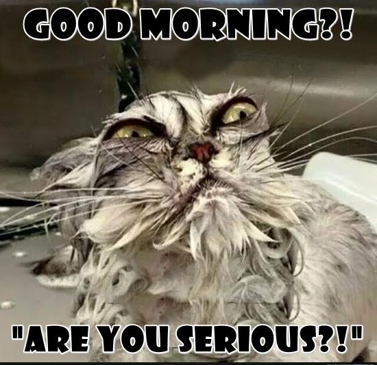 funny good morning cat meme