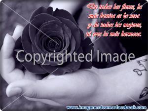 Poemas de Amor para mi Novia de Buenos Días (1)